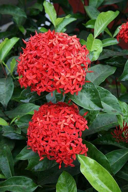 Super 8 Flores que Gostam de Sol Direto e Pouca Água para Vaso! CD95