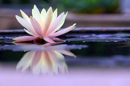 fotos de flores orientais
