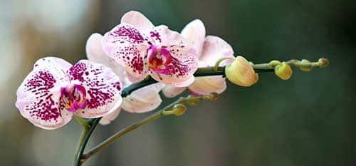flores que amam o sol
