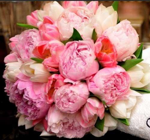 rosa em vários tons
