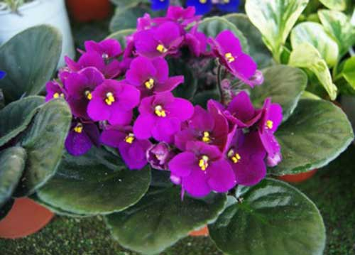 7 Flores Que Gostam De Sombra Ou Meia Sombra