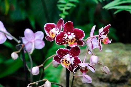 plantando orquídeas