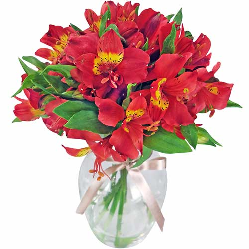 flores belas