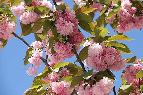 árvores com flores