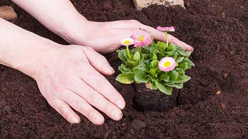 como fazer um jardim bonito