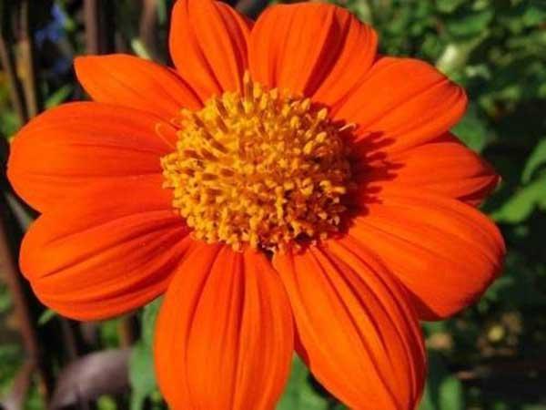 cor laranja