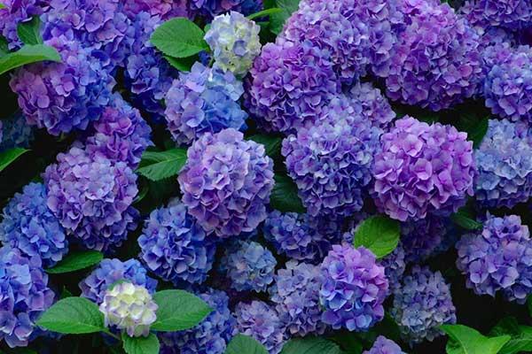 roxas e violetas