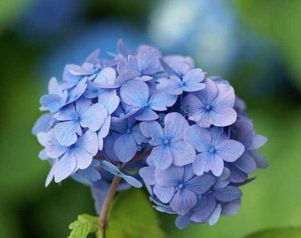 ideias de flores