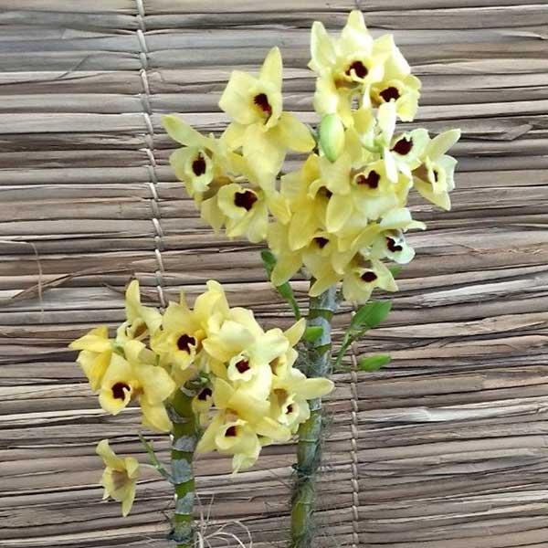 fotos de orquidário