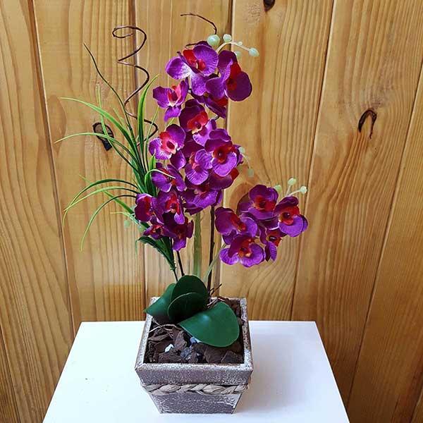 Fotos de Orquídea Roxa