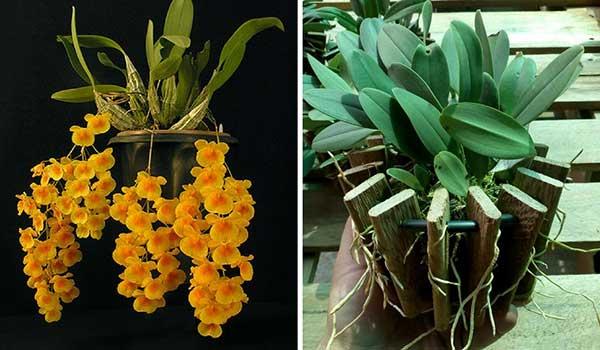 pode ser cultivada em casa