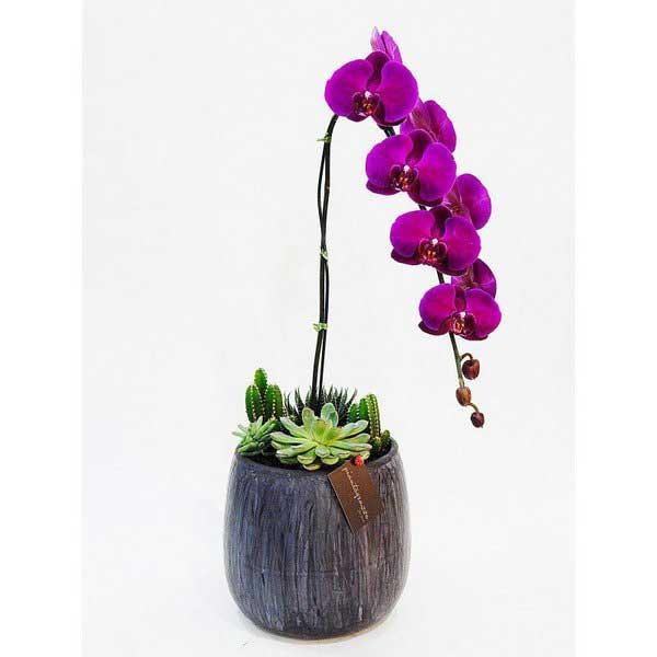 Imagem de Orquídea Roxa